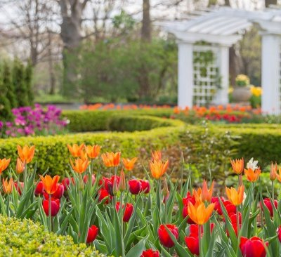 Image result for Spring Blooms newfields